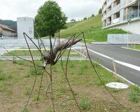 moskito-2