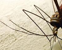 moskitohead